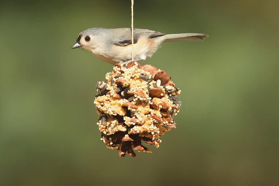 Caregiver in Northbrook IL: Creating a Birdwatching Garden